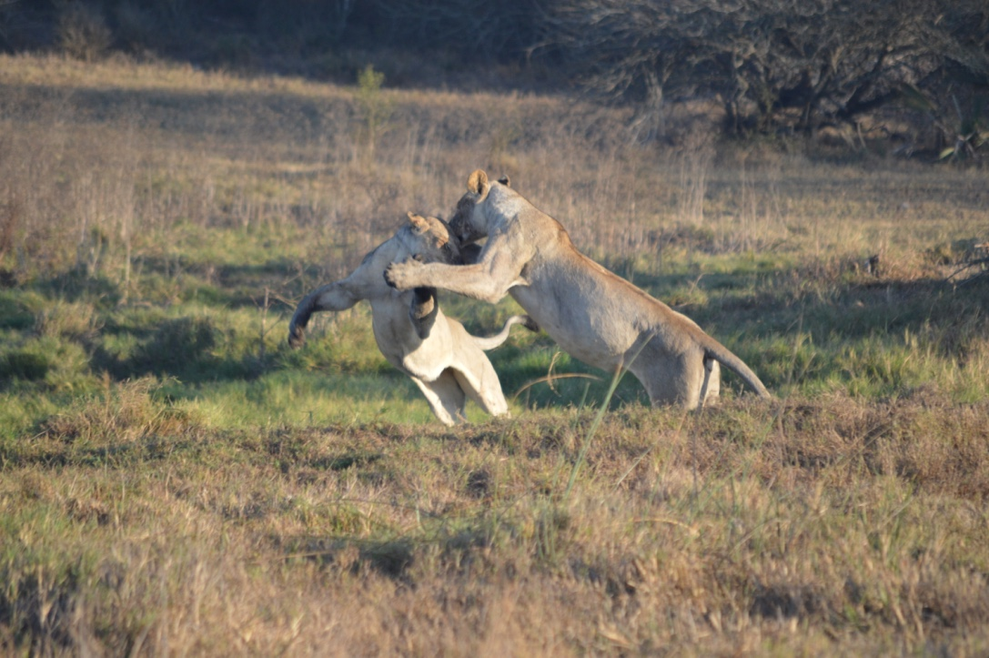 IoT Wildlife Tracking Telemetry Meter Reading